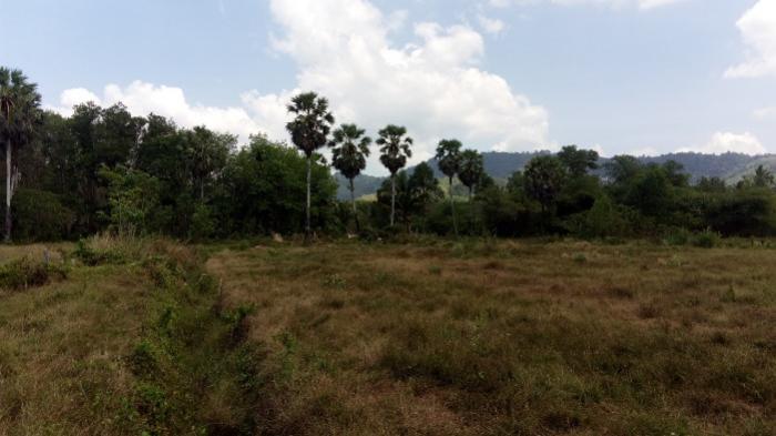 Natai 13 Rai of Land Plot-IMG_20180303_121437.jpg